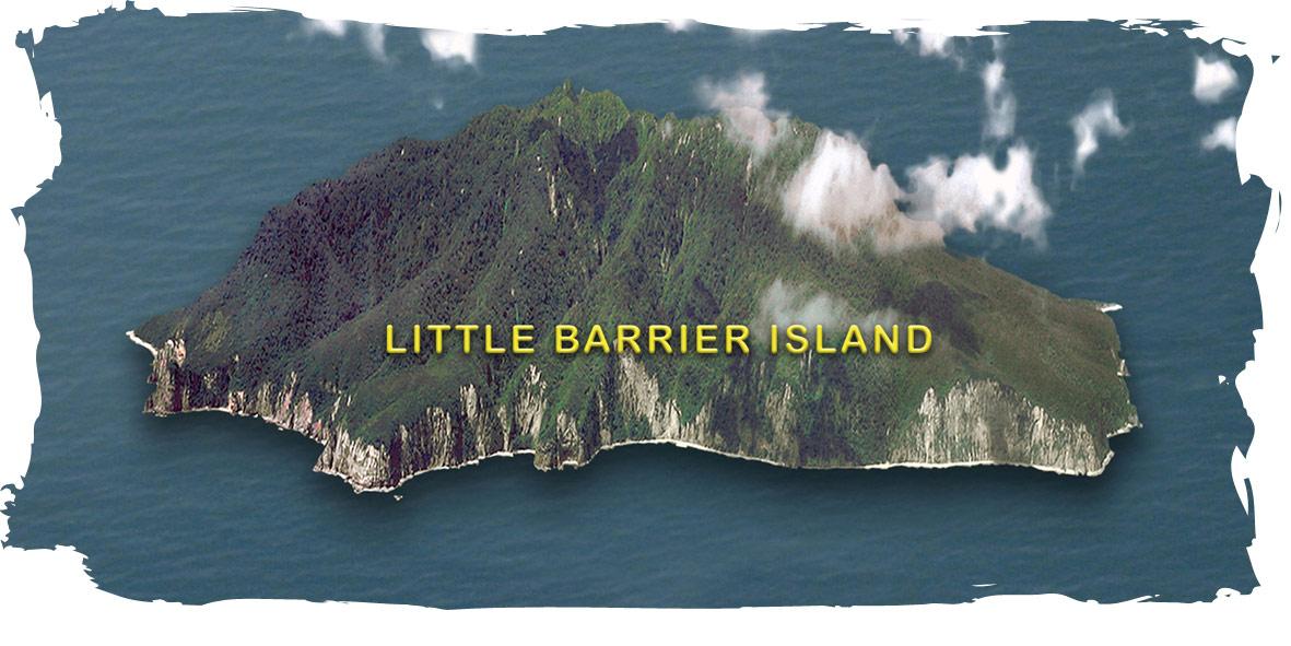Goat Island Dive & Snorkel | Dive Little Barrier Island | Auckland ...